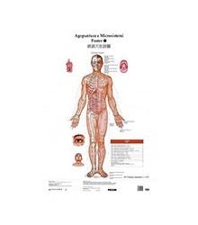 Tavole di Agopuntura e...